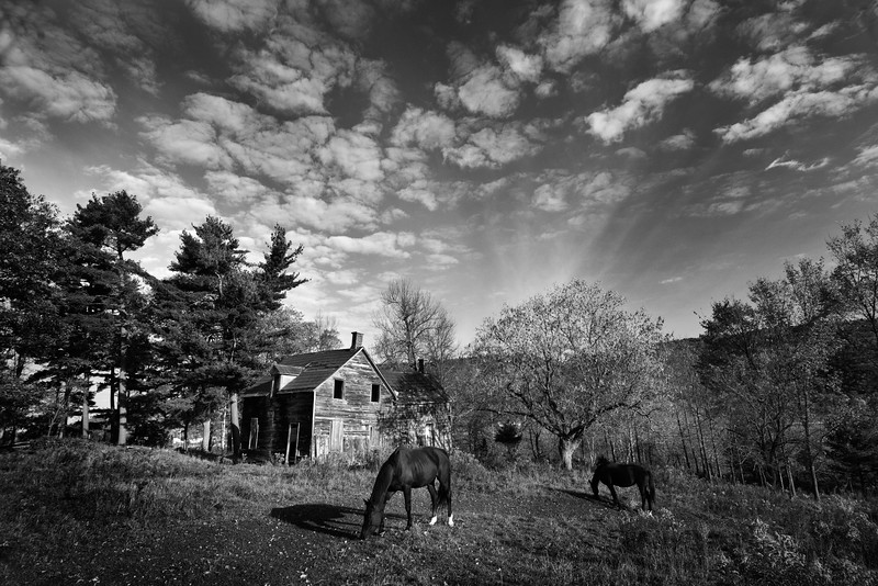 chevaux_83801