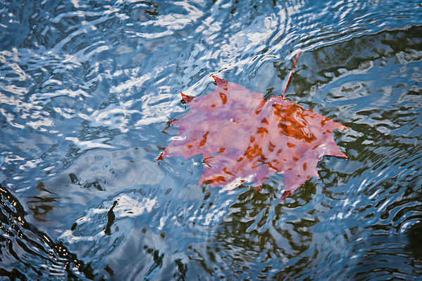 WaterQuality_5920