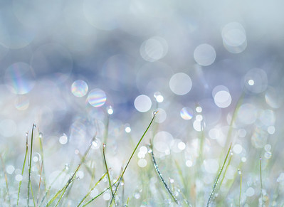 Frosty Grass Bokeh in Blue