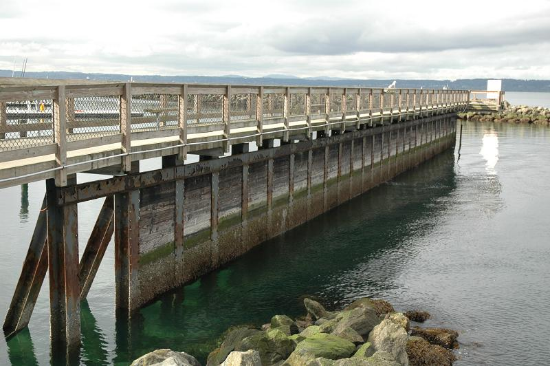 March 2007 - Looking south towards Shilshole Bay Marina. This is the side that the Didemnum patches are located on, about halfway down the pier. Photo by Mark Dixon