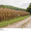 //www.dreamstime.com/royalty-free-stock-photos-corn-fields-ready-harvest-picking-its-time-midwest-southern-illinois-farmers-road-used-tractors-farm-equipment-image76961328