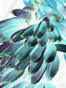 HI 2011 Maui 164 awua