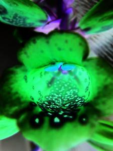 Foxglove Purple 1 glow invert