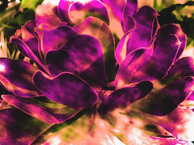 CO 2011 06 DBG 19 fractal color