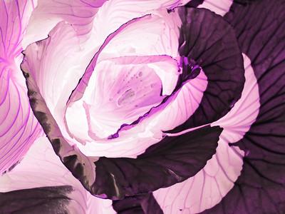 CO 2011 06 DBG 13 invert