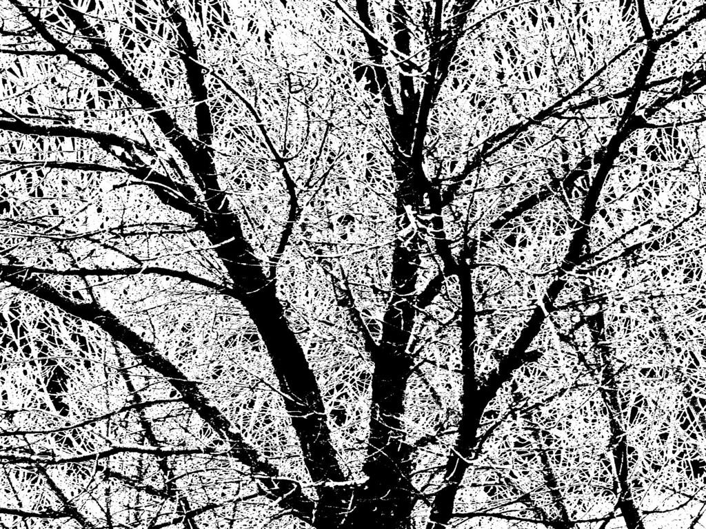 Tree, Ann Arbor '01