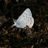 Blue_Swan Lk_Tupper_BC_Canada-191