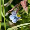 Blue_Beatton Provincial Park_BC_Canada-071