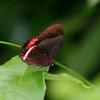 Butterfly- Puerto Morelos_MX 497-2