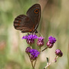 Butterfly_Mpala_Kenya-5711