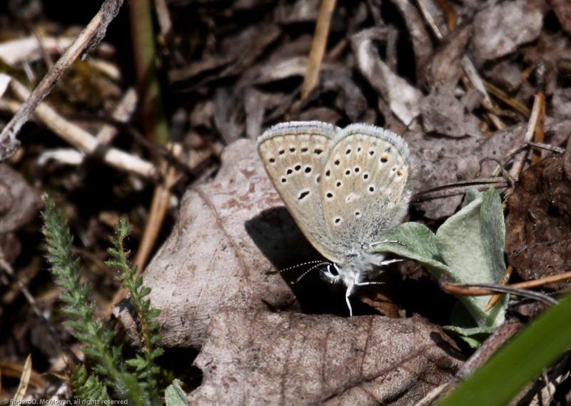 Greenish Blue_Ormond Lk_BC_Canada-0916