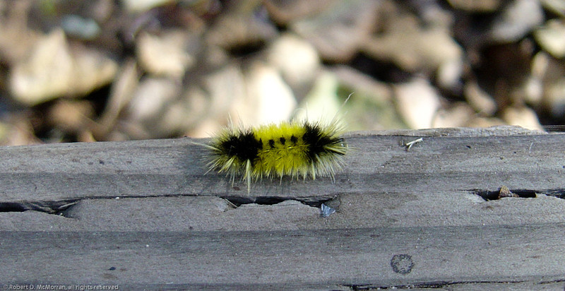 caterpillar- VenCo_CA 6052