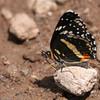 Bordered Patch_Chiricahua NM_AZ-2198