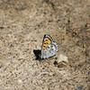 Mariposa Copper_Maxan Lk_BC_Canada-750