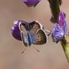 Marine Blue_Ventura_Ventura Co_Ca-002886