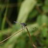 Dragonfly_Mpala_Kenya-9654