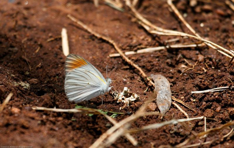 Mpala-Kenya_Africa-9206