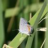 Blue_Chiricahua Mtns_AZ-2430