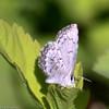 Blue_Ormond Lk_BC_Canada-1