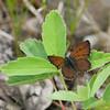 Mariposa Copper_Maxan Lk_BC_Canada-837