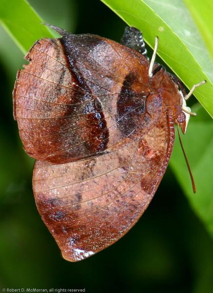 Butterfly- Puerto Morelos_MX 488