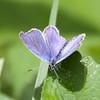 Blue_Swan Lk_Tupper_BC_Canada-001767