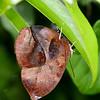 Butterfly- Puerto Morelos_MX 488-2