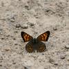 Mariposa Copper_Maxan Lk_BC_Canada-834