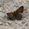Mariposa Copper_Maxan Lk_BC_Canada-825