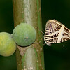 Butterfly- Puerto Morelos_MX 548