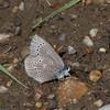 Silvery Blue_Swan Lk_Tupper_BC_Canada-001783