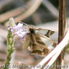 Butterfly_Rio Grande Valley_TX-126