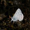 Blue_Swan Lk_Tupper_BC_Canada-189