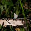 Blue_Swan Lk_Tupper_BC_Canada-157