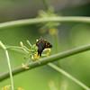 Butterfly- Puerto Morelos_MX 480