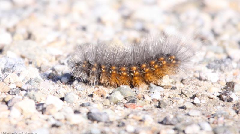 Caterpilllar-SaticoyPonds_VenCo_CA-9204