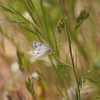 Checkered White- VenCo_CA_6049-2
