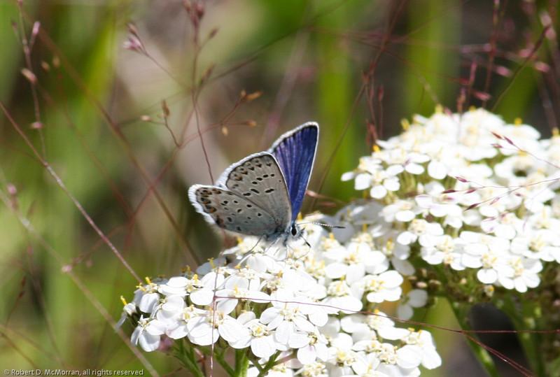 Northern Blue_Maxan Lk_BC_Canada-759
