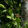 Butterfly- Puerto Morelos_MX 491
