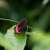 Butterfly- Puerto Morelos_MX 498