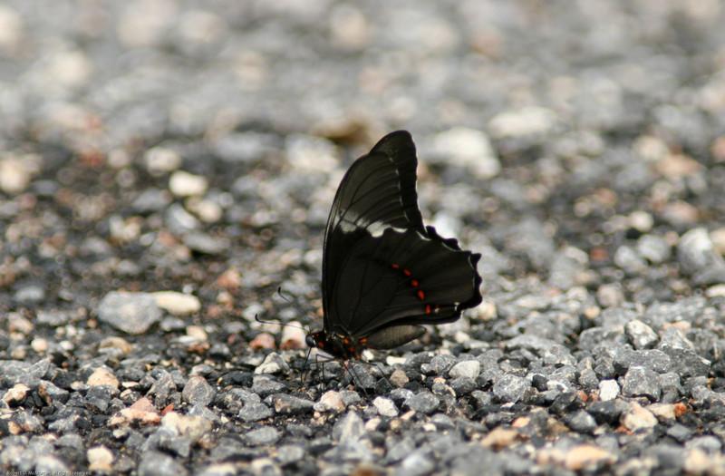 Butterfly- Sian Kaan_MX 103