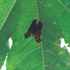 Question Mark (black form-summer)- Polywog Pond-TX- 2003_1