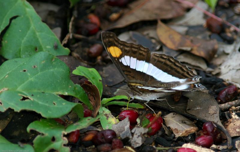 Butterfly- Puerto Morelos_MX 503