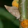 Butterfly- Puerto Morelos_MX 545