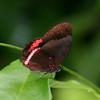 Butterfly- Puerto Morelos_MX 497