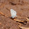 Butterfly_Mpala_Kenya-9157