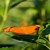 Butterfly- Sian Kaan_MX 285