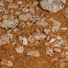 hidden burrow of dancing white lady spider, <i>Leucorchestris arenicola</i> (Sparassidae). Gobabeb, Erongo Namibia