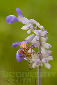 Biodiversity Group, PICT4044