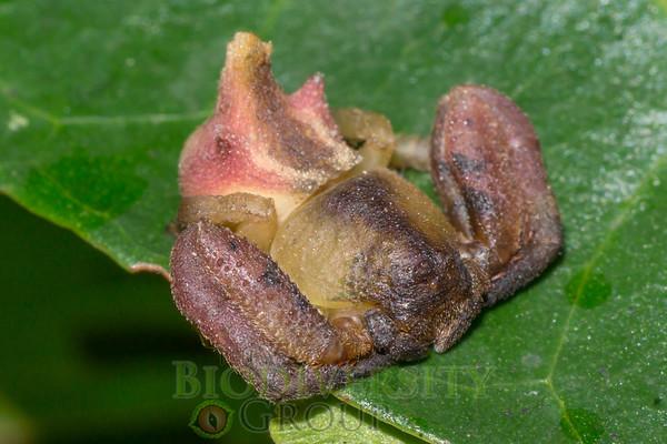 Biodiversity Group, DSC00401